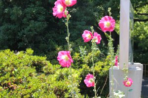 PHOTO321 - コピー (2)